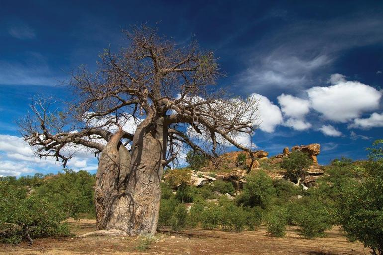 Hwange National Park Johannesburg Essential African Safari Trip