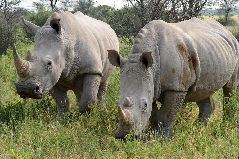 Rhodes Victoria Johannesburg to Zanzibar Trip