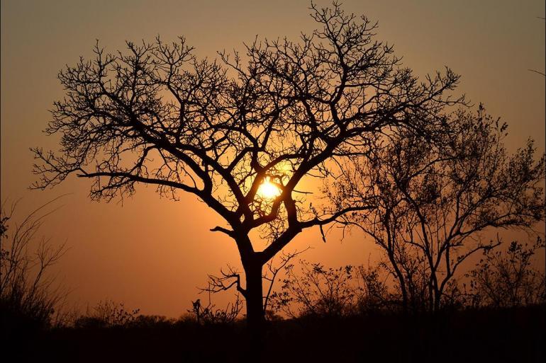 Nature & Wildlife Wildlife viewing Kruger Lodge Experience package