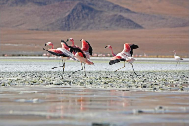 Local Immersion Historic sightseeing Explore Peru & Bolivia package