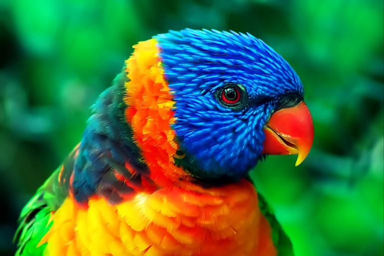 Bolivia: Amazon Jungle Short Break tour