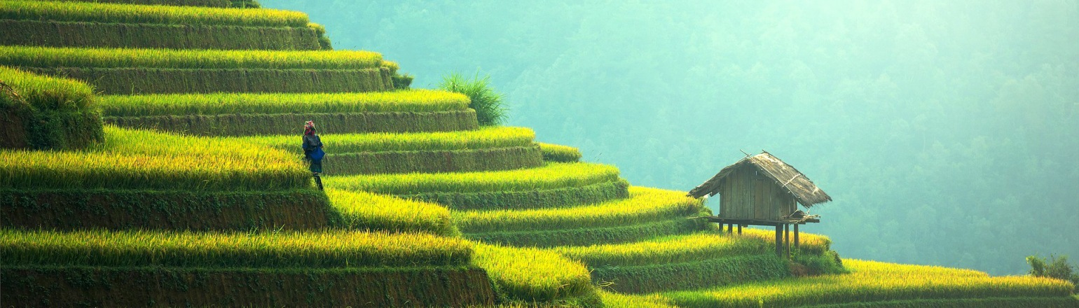 Woman walking among tiered rice paddies in the early morning in Asia