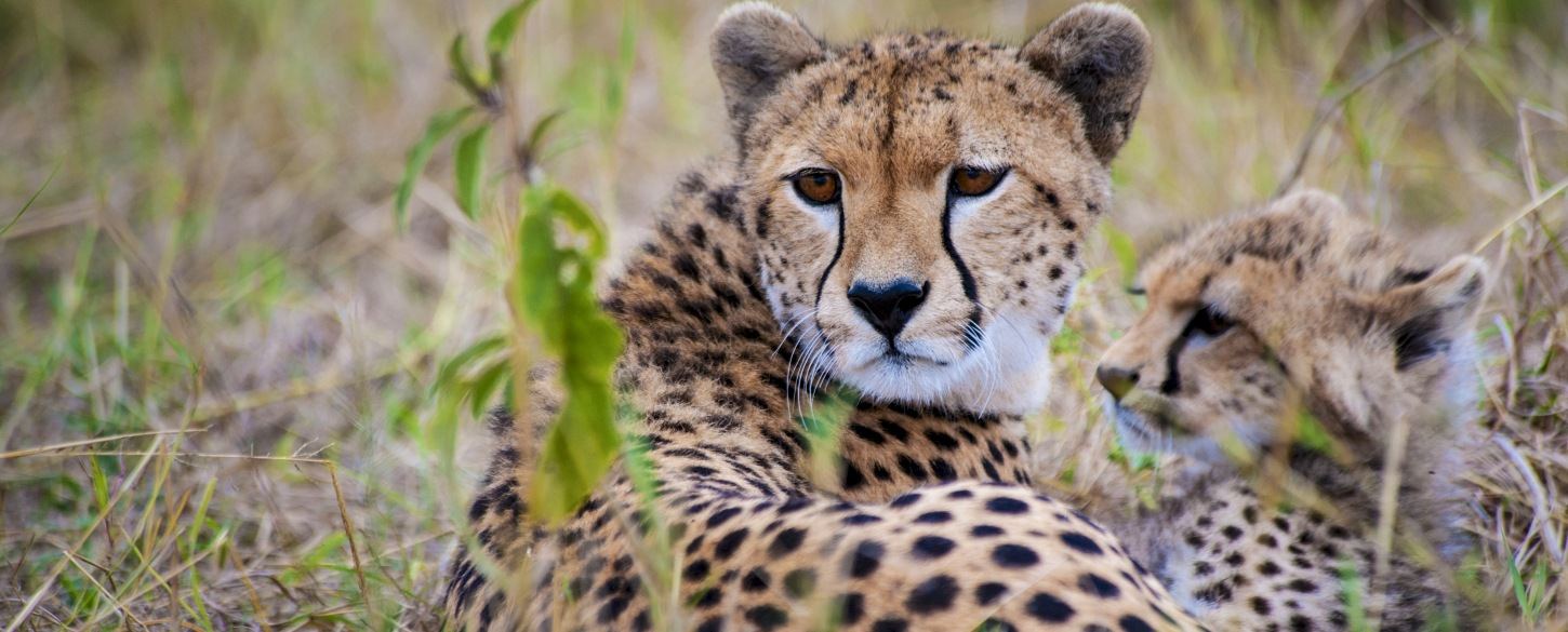 Bulgaria Australia & the Pacific Africa 2015: National Geographic Traveler's Top Tours of a Lifetime
