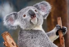 Australia Pacific: National Geographic Traveler's Tours of a Lifetime 2014 tour