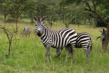 8 Days Uganda Cultural & Gorilla Safari tour