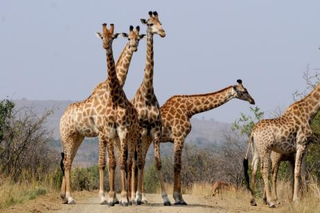 South Africa Adventure Safari tour