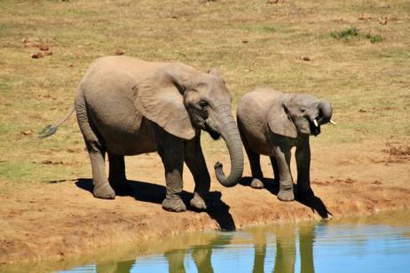 7 Day Safari And Tour tour