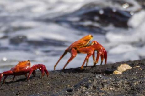 Classic Galapagos - Central Southern Islands  (Grand Queen Beatriz)