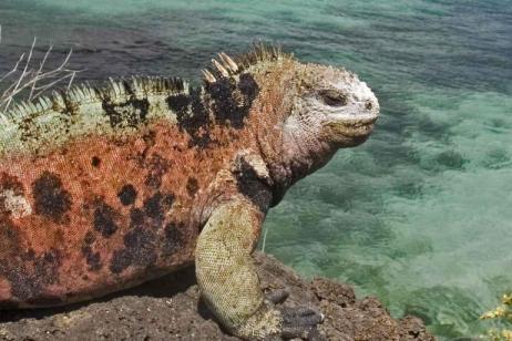 Galapagos Encounter - Southern Islands  (Grand Queen Beatriz)