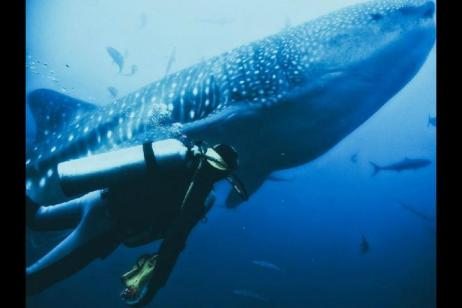5-Day Galapagos Diving Tour W/ Santa Cruz Island tour