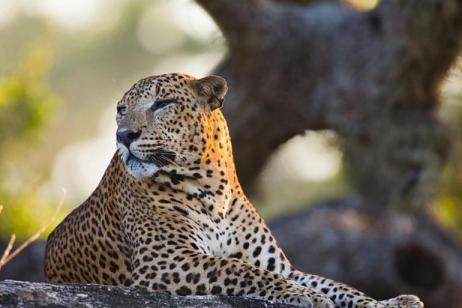 Rainforest, Turtles, and Leopards tour