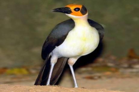 Ghana - Mega Birding Tour I 2018 tour