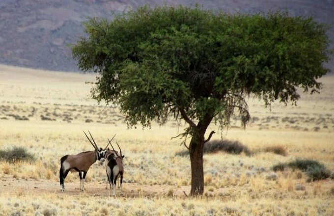 Spirit of Adventure: Classic Tented and Lodge Safari Package tour