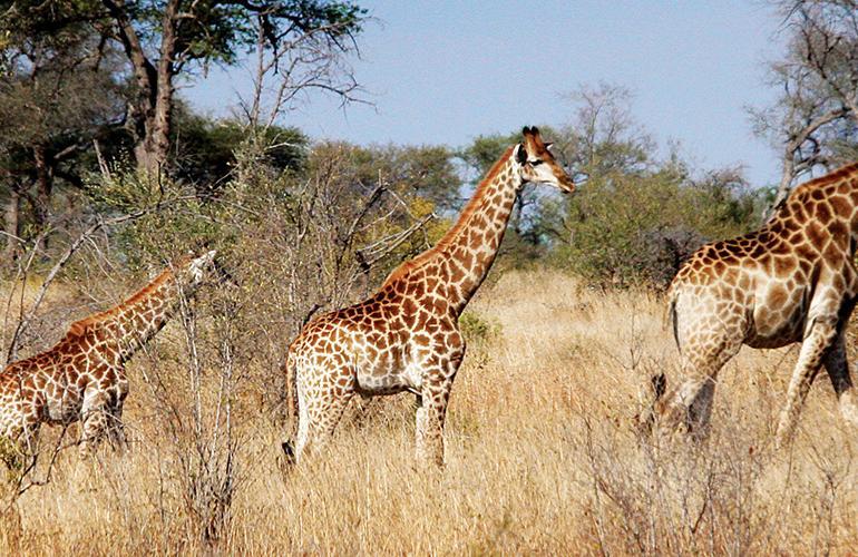 Vic Falls to Kruger tour