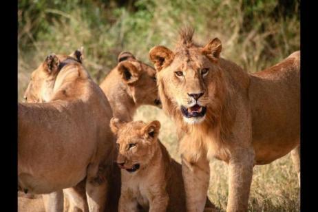 Family Serengeti Safari and Zanzibar tour