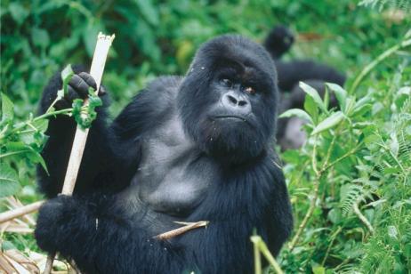 12-Day East Africa Gorilla Trek + Safari tour