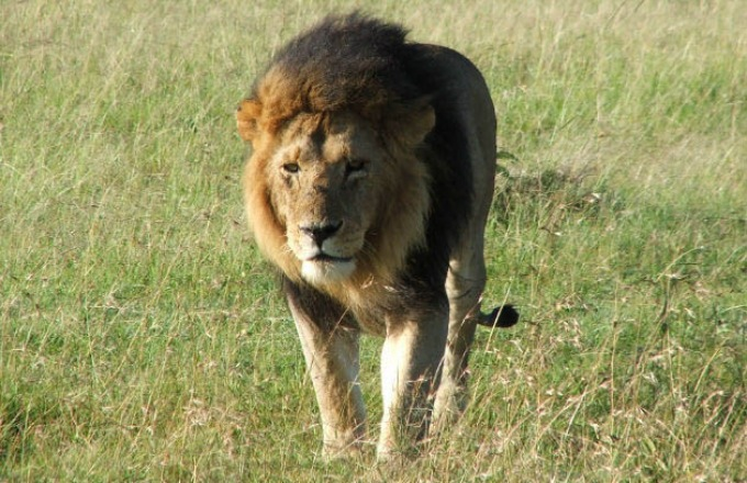 The Best of Kenya and Tanzania: A Classic Safari tour