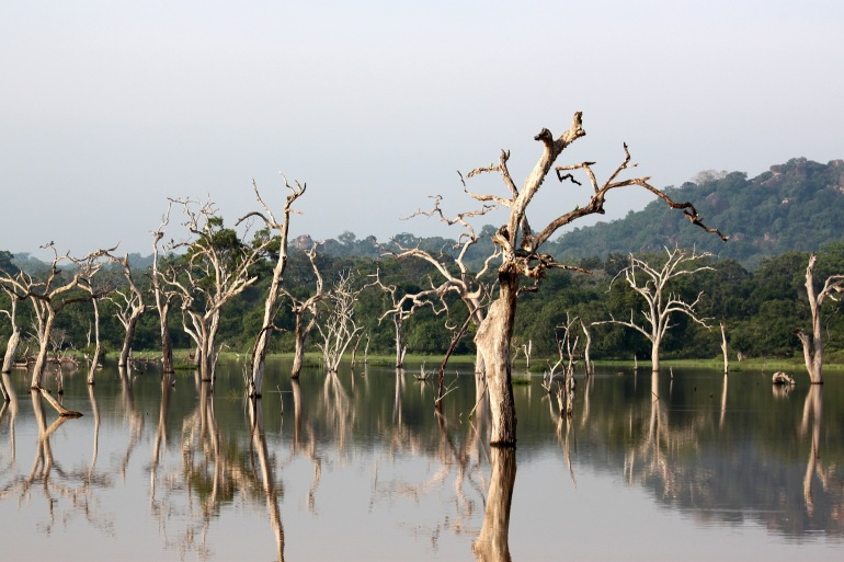 Lake View of Yala National Park, Sri Lanka