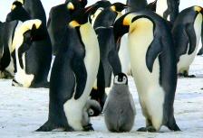 Antarctica  Attractions