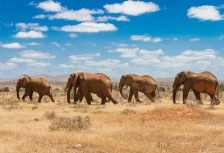 5 Great African Safaris for Boomers  tour