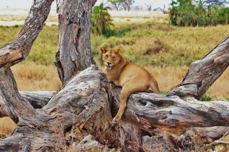 Tanzania Photo Safari tour