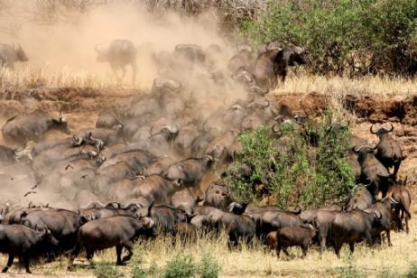 Tanzania and the Great East African Migration tour