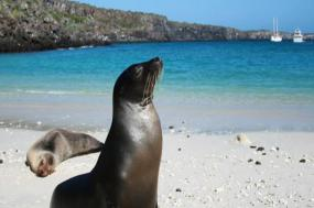 Galapagos at a Glance - Southern Islands - (Daphne)