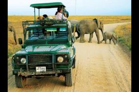 Private Departure - Serengeti Lodge Safari tour