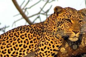 Samburu Experience - Independent tour