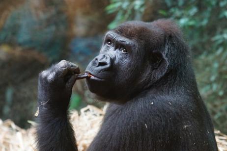 Gorillas & Masai Mara tour