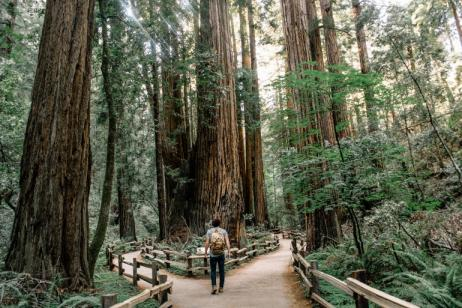 On the Road: The Oregon Coast, California Redwoods and Crater Lake tour