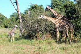 The Mobile Walking Safari tour