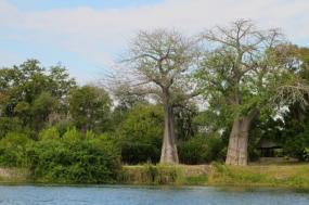 Malawi: Service and Safari tour