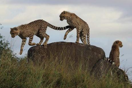 Greater Kruger Safari tour