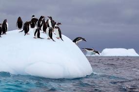 Fly & Cruise - Antarctic Explorer & Falklands Islands - 2016/17 Season tour