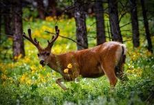 Top Trips to Encounter Wildlife