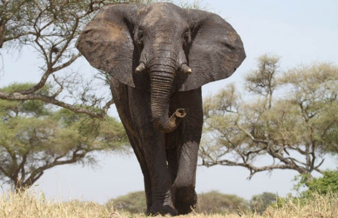 Intergenerational African Wildlife Encounters tour