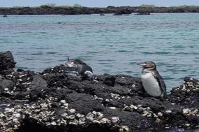 In the Footsteps of Darwin on Santa Cruz & Isabela Islands with Ecuador's Amazon tour