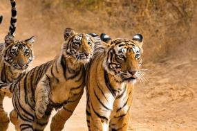Essence of India with Ranthambore (Summer 2018) tour