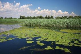 Birding in the Danube Delta tour