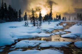Yellowstone Winter Wildlife In-depth tour