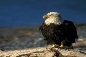 Nature's Best: Alaska with Alaska Cruise tour