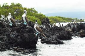 Experience the Galapagos tour