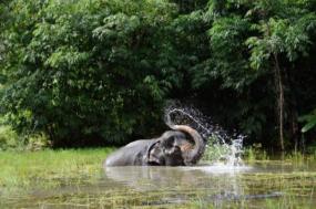 Thailand – Elephants & Islands Expedition