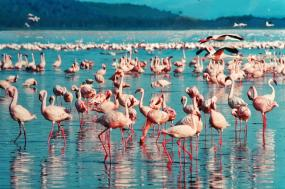 Jewels of Kenya tour