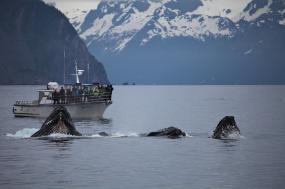 Grand Alaskan Cruise & Tour tour