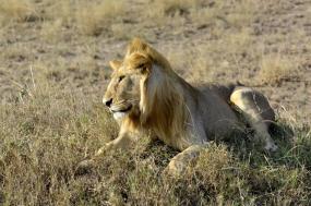 10-Day Wildebeest Calving Season Safari  tour
