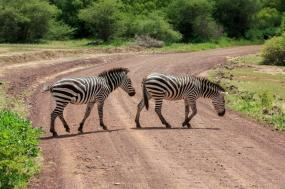 3 Day Safari To Selous Game Reserve By Sb