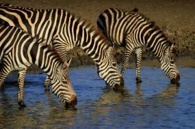 4 Days Tanzania Luxury Camping Safari