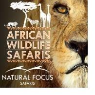 Natural Focus Safaris
